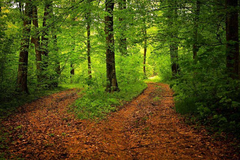cammino dei briganti bivio nel bosco