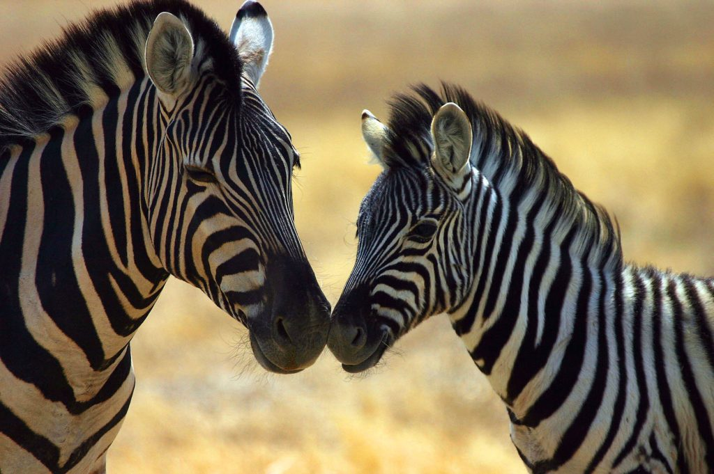 naukluft trail namibia