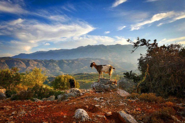 creta paesaggio con capra